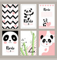 pandas invitation cards newborn cute animals of vector image