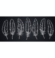 sketch feathers on blackboard vector image vector image
