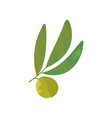 small olive branch with green leaves isolated on vector image vector image
