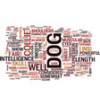the collie dog text background word cloud concept vector image vector image