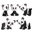 collection of the cute panda vector image vector image