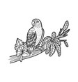 parrot on a tree branch sketch vector image