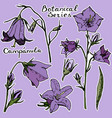 vecrot sticker campanula violet background vector image