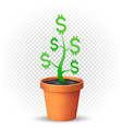 dollar plant grows in flowerpot vector image