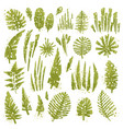 tropical textured leaves set with expressive vector image
