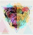 hipster animal realistic and polygonal bulldog on vector image vector image