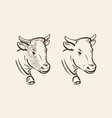 portrait of cow with bell dairy farm animal vector image vector image