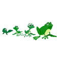 process of growing a frog vector image
