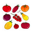 tomatoes set of different shapes and colors vector image