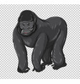 wild gorilla on transparent background vector image vector image