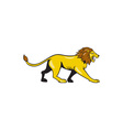 Angry Lion Walking Roar Cartoon vector image