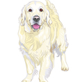 dog breed Labrador Retriever vector image vector image