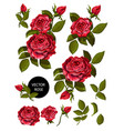 set red roses and elements for your design vector image vector image