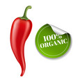 chilli pepper with label vector image
