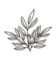 branches foliage leaves decoration nature isolated vector image vector image