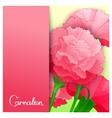 Carnation flowers design vector image vector image