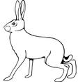 European hare vector image