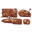 fossil dinosaurs skeletons buried snails shells vector image