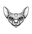 head sphynx cat breed in vintage monochrome vector image vector image