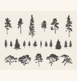 set silhouettes trees pine fir cedar sketch vector image