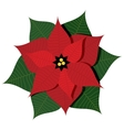 with christmas star plant or vector image
