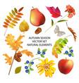 autumn season collection vector image vector image