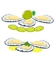 sea food shells of oysters lemon and lime pieces vector image vector image