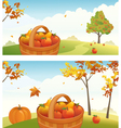 Apple harvest backgrounds vector image vector image