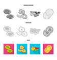isolated object of food and raw logo collection vector image