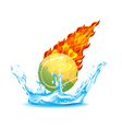 tennisball vector image vector image
