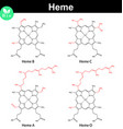 Heme molecules with marked variable fragments vector image vector image