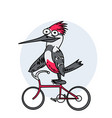 funny bird on a bike vector image