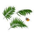 three palm leaves set vector image