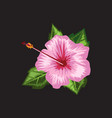 hibiscus blooming flower with watercolor or hand vector image vector image