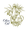 sketch poster of olives and olive oil vector image vector image