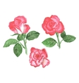 Three roses vector image