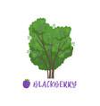 blackberry garden berry bush with name vector image