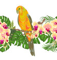 floral border seamless background and sun conure vector image