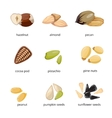 Seeds and nuts icons in cartoon style vector image