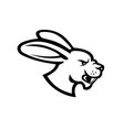 angry jackrabbit hare rabbit head side view vector image vector image
