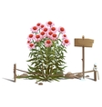 Blooming flowers in the ground fence and sign vector image vector image