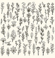 collection handdrawn doodle herbs and flowers vector image