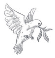 dove or pigeon with olive branch isolated bird vector image vector image