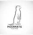 meerkats design on white background wild animals vector image