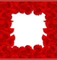 red carnation flower border dianthus caryophyllus vector image