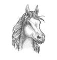 Scottish pony sketch for horse breeding design vector image