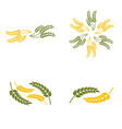 wheat oats logo vector image vector image