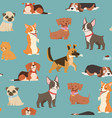 dogs and puppies different breeds wrapping paper vector image