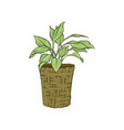 green plant in flowerpot hand drawn vector image