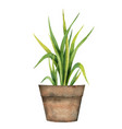 watercolor card with a lemon grass in a vector image vector image